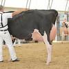 OntarioSummer2017_Holstein_1M9A3100