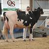 OntarioSummer2017_Holstein_1M9A2993