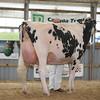 OntarioSummer2017_Holstein_1M9A3128