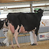OntarioSummer2017_Holstein_1M9A3044