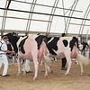OntarioSummer2017_Holstein_1M9A2914