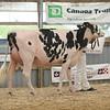 OntarioSummer2017_Holstein_1M9A2758