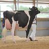 OntarioSummer2017_Holstein_1M9A3052