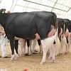 OntarioSummer2017_Holstein_1M9A2815
