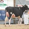 OntarioSummer2017_Holstein_1M9A2762
