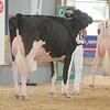 OntarioSummer2017_Holstein_1M9A2972
