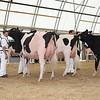 OntarioSummer2017_Holstein_1M9A2916
