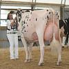 OntarioSummer2017_Holstein_1M9A3110