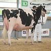 OntarioSummer2017_Holstein_1M9A3062