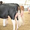 OntarioSummer2017_Holstein_1M9A3198