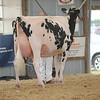 OntarioSummer2017_Holstein_1M9A3036
