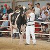 OntarioSummer2017_Holstein_1M9A3192