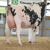 OntarioSummer2017_Holstein_1M9A3126