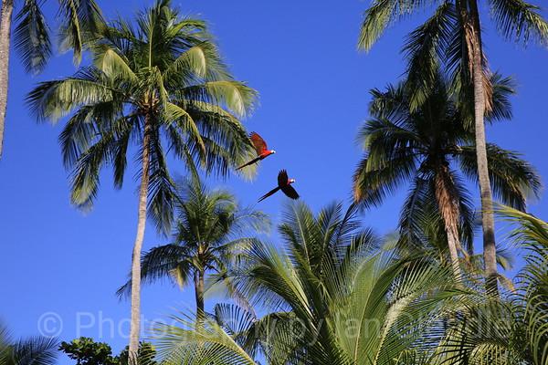 Panama Costa Rica 2017