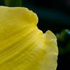 Photo 6: Texture