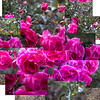 Photoshop 2: Floral Puzzle Pieces
