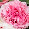 Breadth 1- Flower