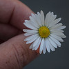 Emphasis5- Daisy Dukes