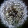 Emphasis 2: Make a Wish