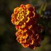 Depth 2: Orange Flower