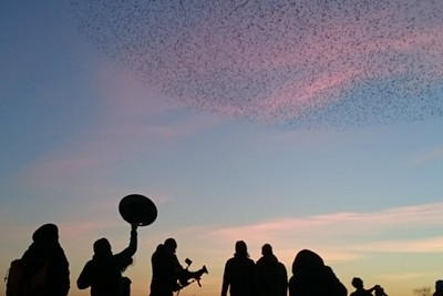 Starling murmuration captured by BBC Winterwatch