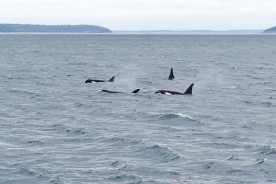 QAE Whale Watching Trip