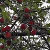 KenHodina-AlLaRocky_Apple study