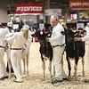 Royal2017_Holstein-3381