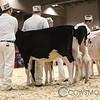 Royal2017_Holstein-3384