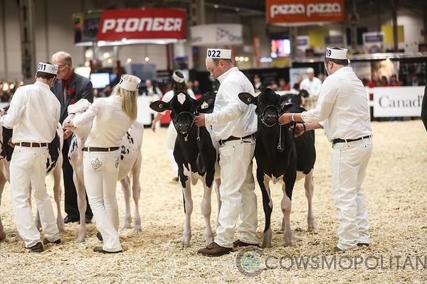 Royal2017_Holstein-3380