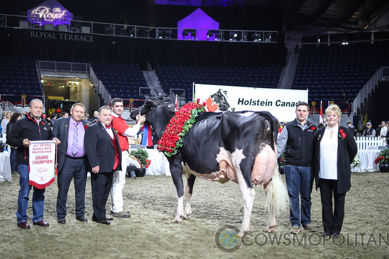 Royal2017_Holstein-7385