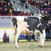Royal2017_Holstein-6541