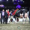 Royal2017_Holstein-7380