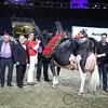 Royal2017_Holstein-7368