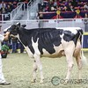 Royal2017_Holstein-6531