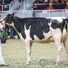Royal2017_Holstein-6532