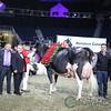 Royal2017_Holstein-7382