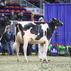 Royal2017_Holstein-6540