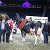 Royal2017_Holstein-7384