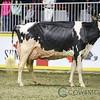 Royal2017_Holstein-6027