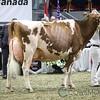 Royal2017_Holstein-6011