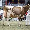 Royal2017_Holstein-6012
