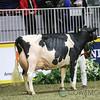 Royal2017_Holstein-6006