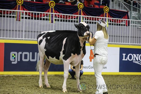 Royal2017_Holstein-4250