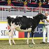 Royal2017_Holstein-4256