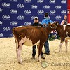 Classic2017_RedHolstein-1479