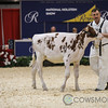 Classic2017_RedHolstein-1486