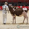 Classic2017_RedHolstein-1483