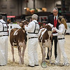 Classic2017_RedHolstein-1480