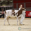 Classic2017_RedHolstein-1488